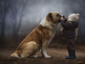dog&boy