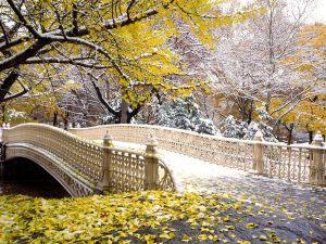 Early_Snowfall_Central_Park_New_York
