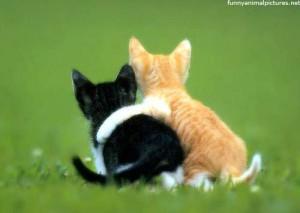 kitten-best-friends
