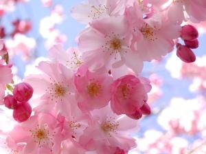 spring-15_1024x768