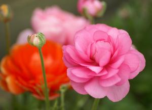beautiful%20fragrant%20flowers