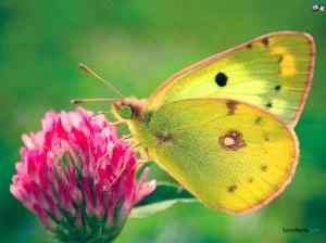 butterfly-5v