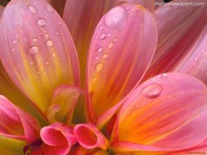 flower-expert-stunning-beauty