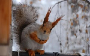 Busy-Little-Squirrel-Winter