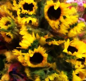 Sunflower in winter