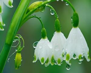 rain-flowers_00262653